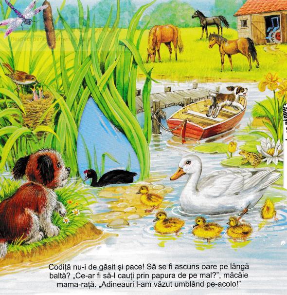 carte montesori cu imagini reale